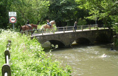 Horses on Freshford Mill Bridge and a local supervising her Swimming Dogs in the River Frome