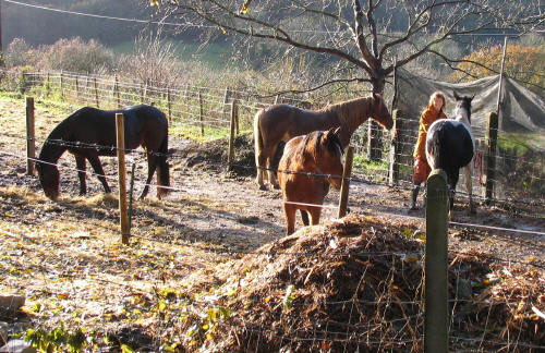 Horses in Iford Lane Somerset
